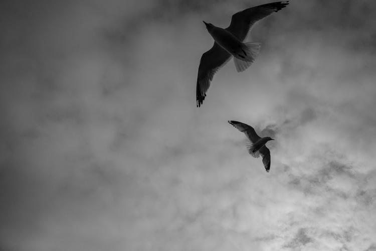 nflc-seagulls-image